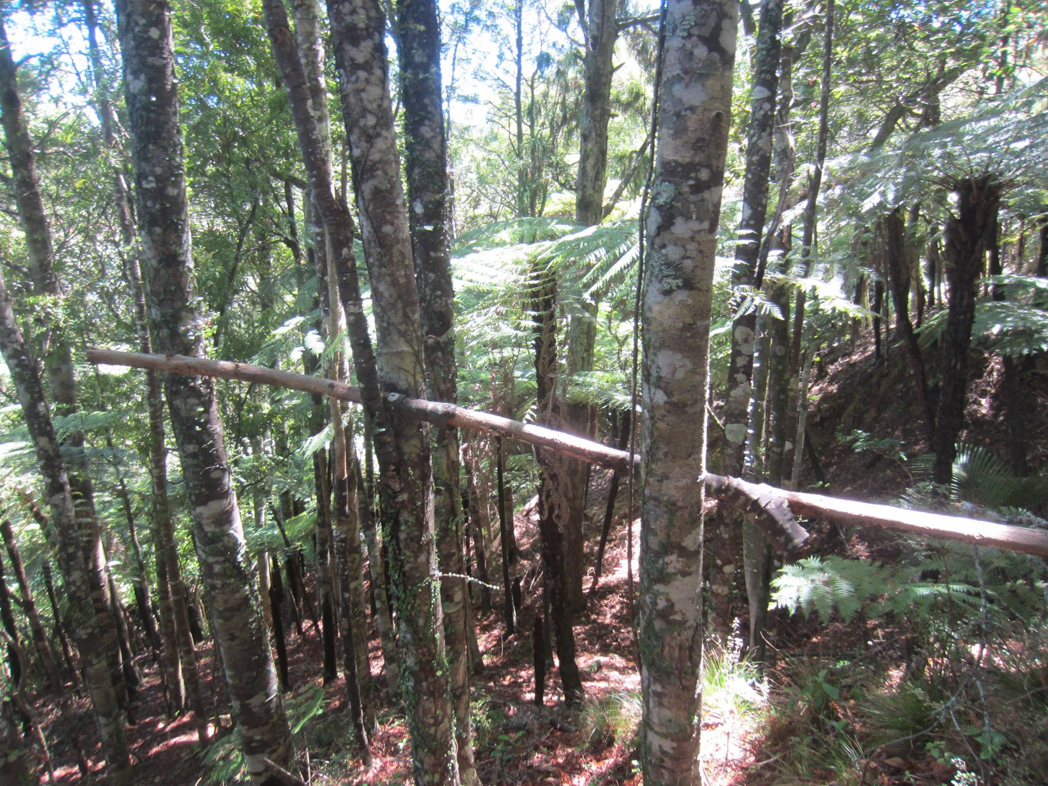 NZ_Bigfoot_Tree_Structure©MarcCoppell