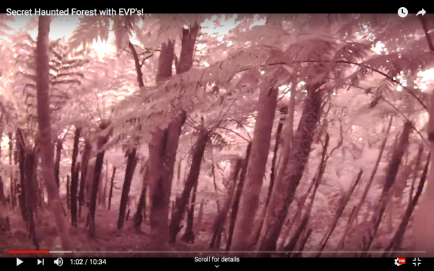 Strange forest screenshot